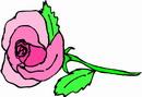 花朵鲜花_745