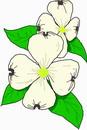 花朵鲜花_748