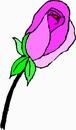 花朵鲜花_890