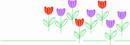花朵鲜花_894