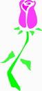 花朵鲜花_917