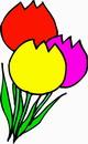 花朵鲜花_922