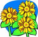 花朵鲜花_993