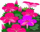 花朵鲜花_994