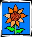 花朵鲜花_999