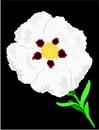 花朵鲜花_1009