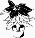 花朵鲜花_1119