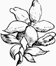 花朵鲜花_1120