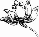 花朵鲜花_1121