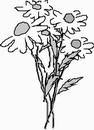 花朵鲜花_1127