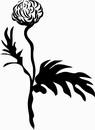花朵鲜花_1135