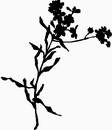 花朵鲜花_1185