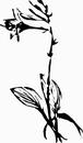 花朵鲜花_1196