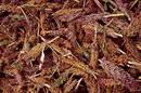 Leaves leaves _71