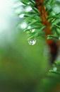 树叶叶子_157