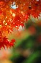 树叶叶子_326