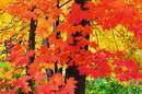 树叶叶子_332