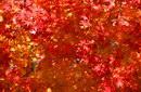 树叶叶子_335