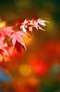 树叶叶子_337