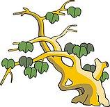 传统树木_121