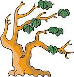 传统树木_122
