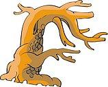 传统树木_124