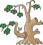 传统树木_129