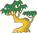传统树木_154