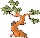 传统树木_159