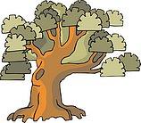 传统树木_162