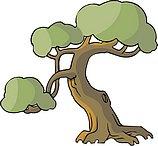 传统树木_165