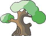 传统树木_167