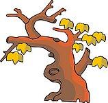 传统树木_61