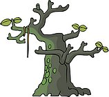 传统树木_62