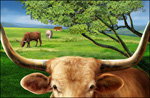 大草原上的牛psd分