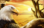 夕阳下的老鹰psd分层素材