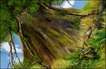 大树头下的小草蜢psd分层素材
