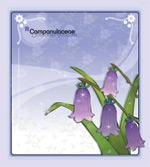 矢量鲜花背景_44