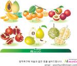 矢量水果3