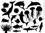 海洋生物剪影