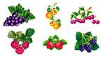 矢量质感水果