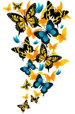 矢量精美蝴蝶