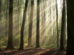 树林精品图片