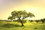 大树图片素材