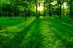 树木与草地黄昏