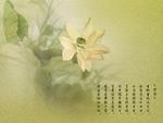 墨迹莲花4