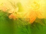 墨迹莲花7
