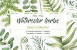 水彩手绘草本植物