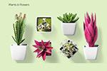 57款小清新花卉