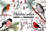 水彩鸟类和树枝